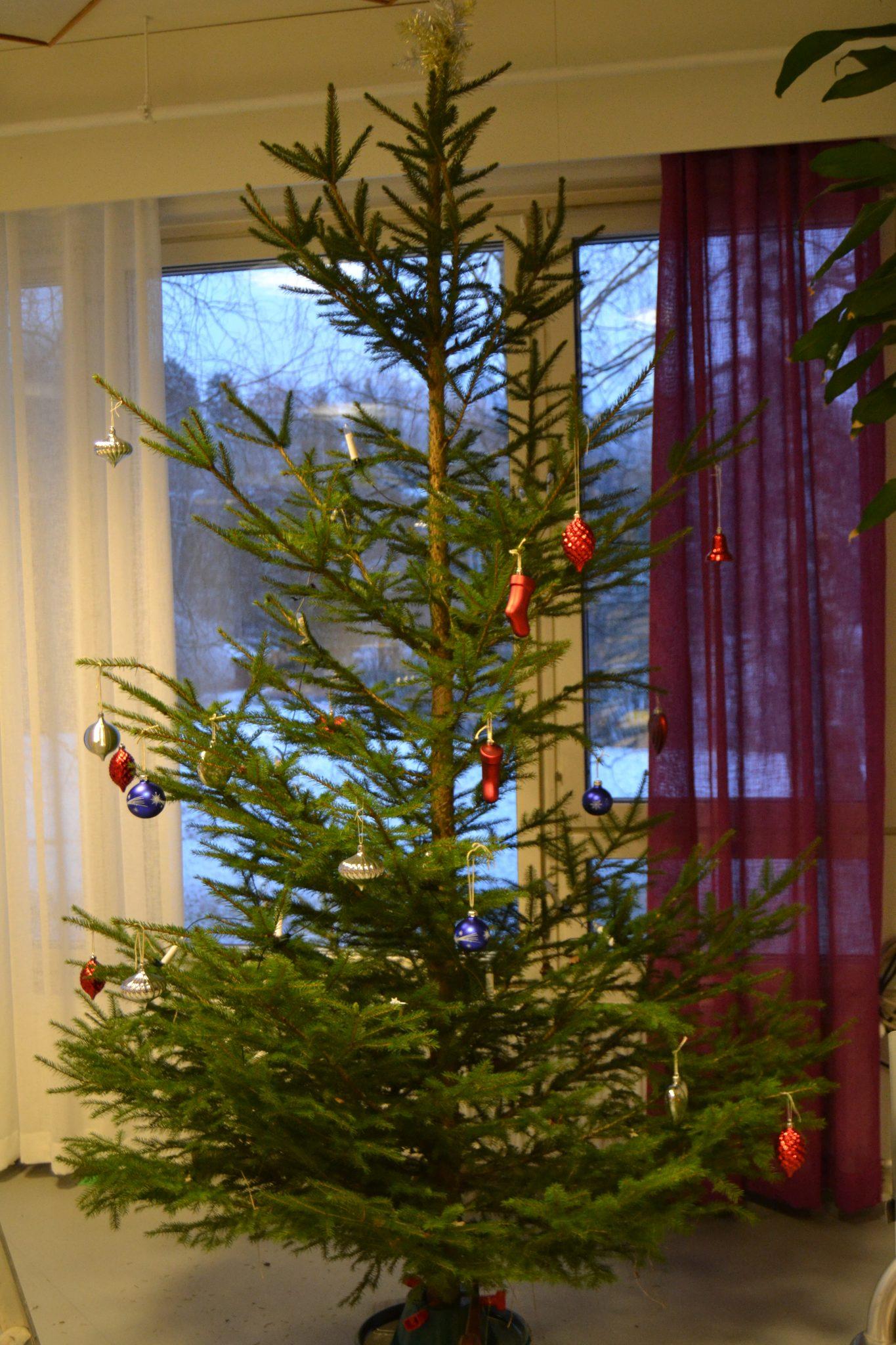 Valmista tuli, joulukuusi sai koristeet