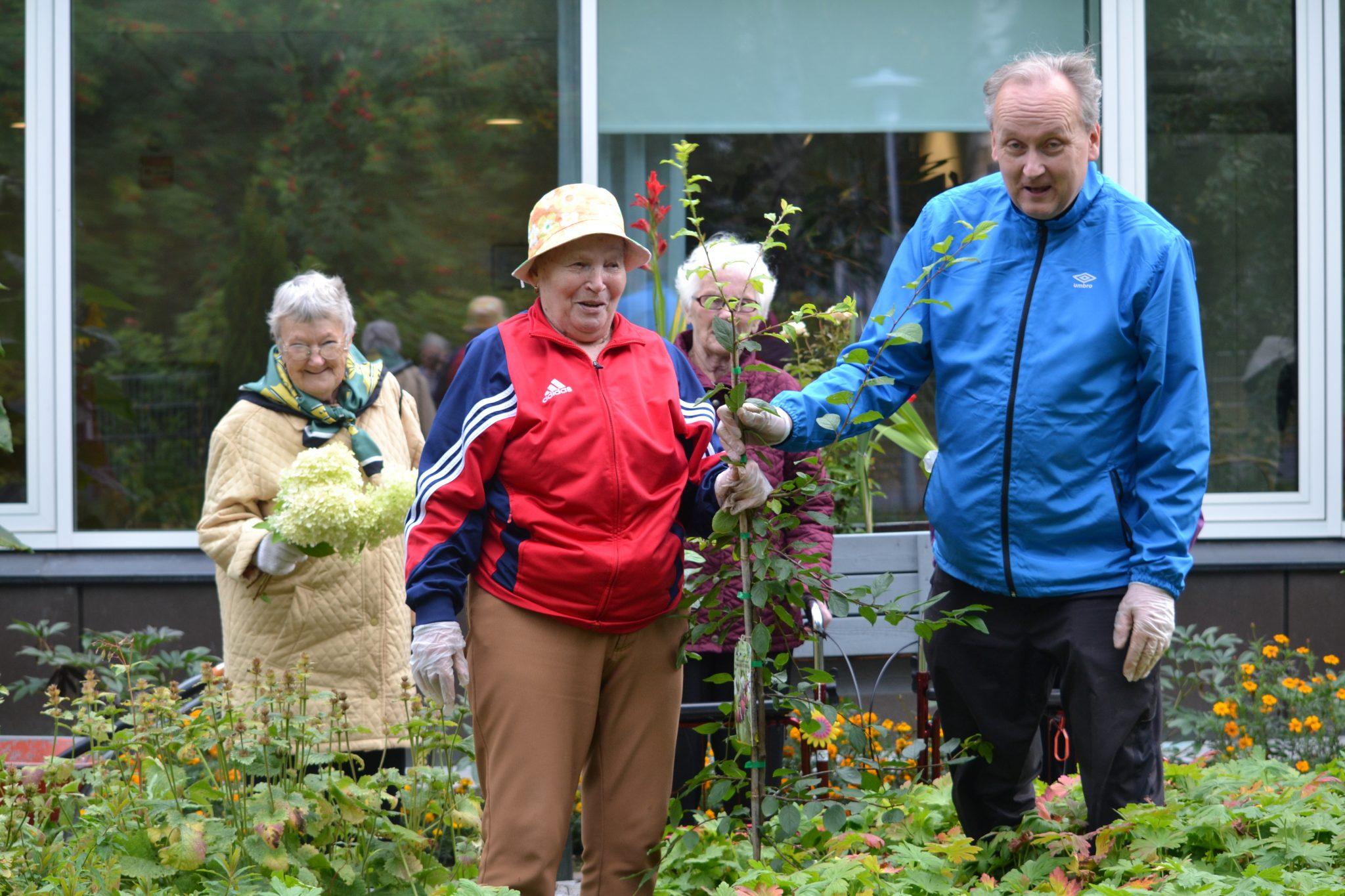 Luumupuu istutettiin Viitakodin pihalle 100 -vuotiaan Suomen kunniaksi syksyllä 2017
