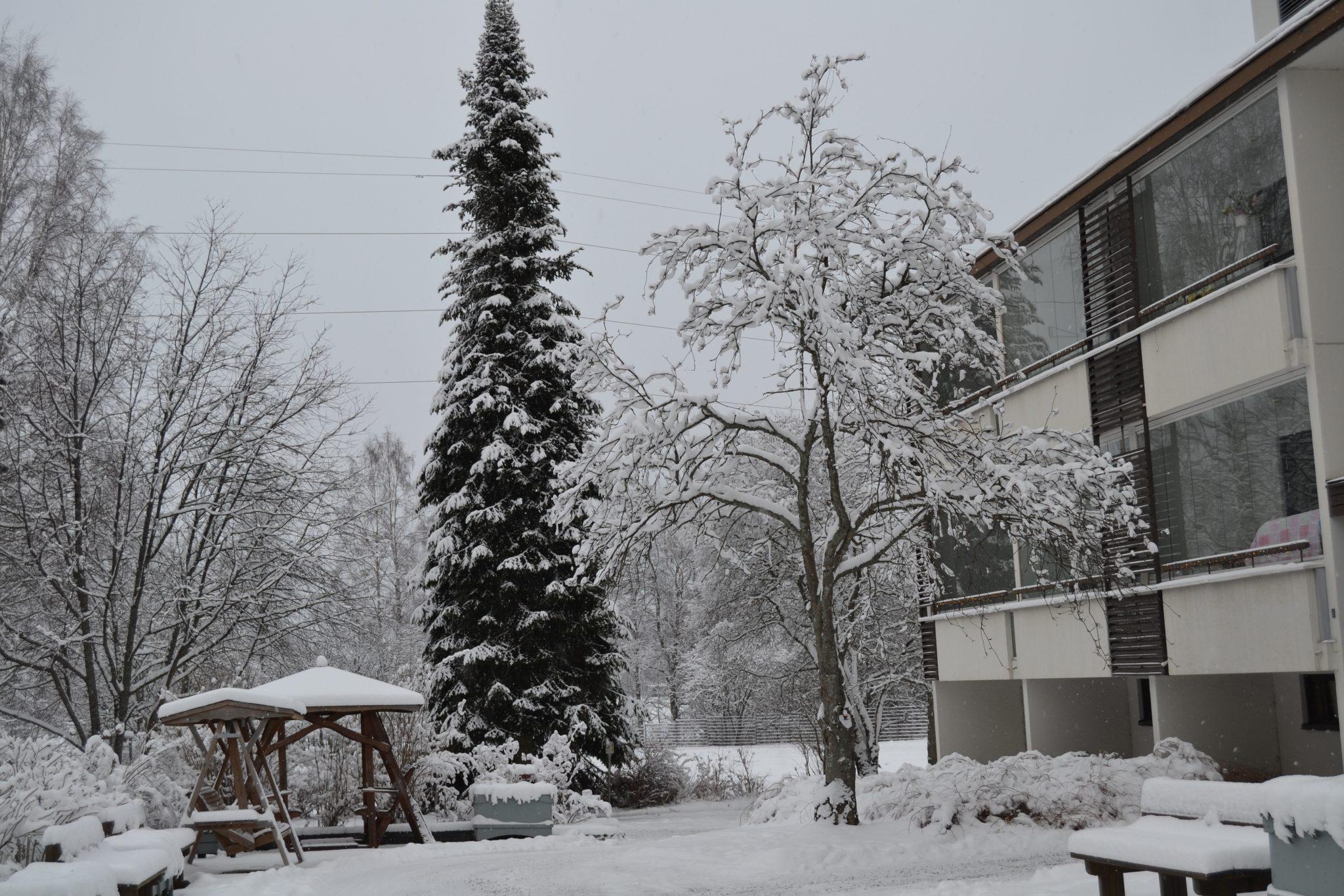 Talvinen Viitahelmi