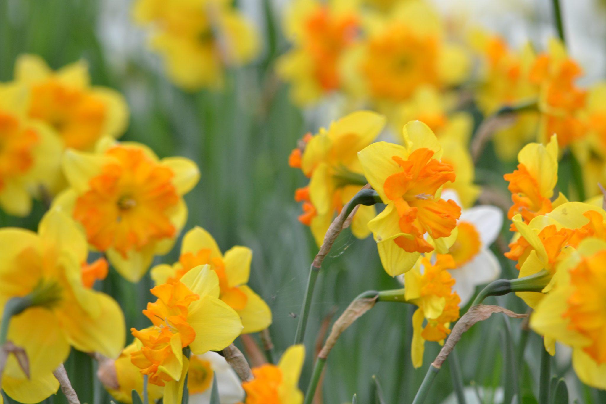 Miltä kevät tuntuu ja näyttää senioreiden näkökulmasta?