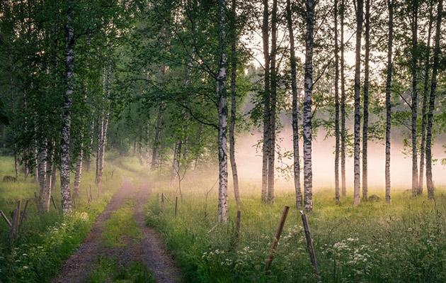 Kaunista metsämaisemaa