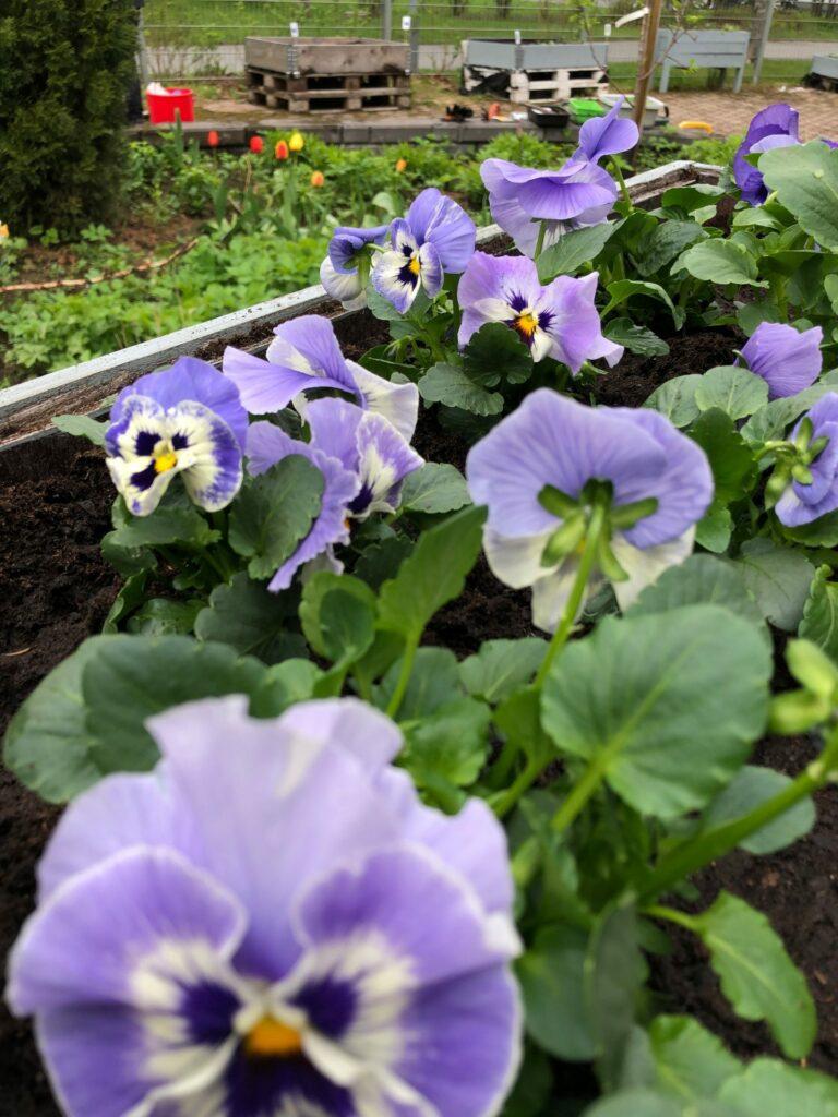 Voimaa ja iloa luonnosta ja puutarhasta
